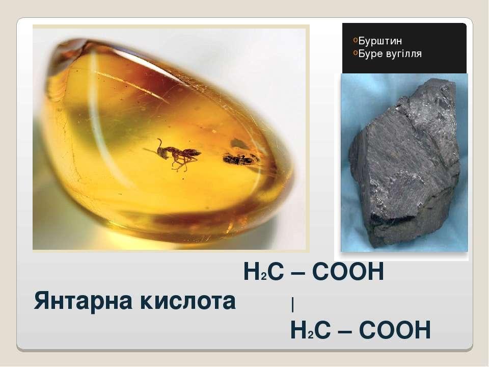 H2C – COOH Янтарна кислота   H2C – COOH Бурштин Буре вугілля