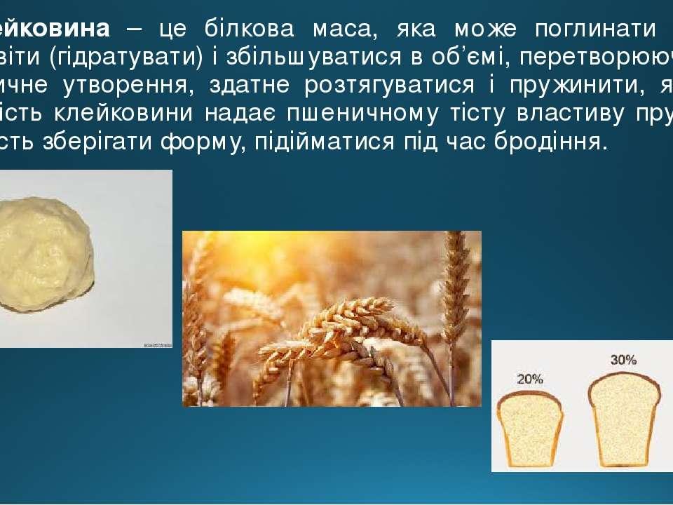 Клейковина – це білкова маса, яка може поглинати воду – бубнявіти (гідратуват...