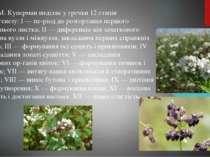 Ф. М. Куперман виділяє у гречки 12 етапів органогенезу: І — пе ріод до розгор...