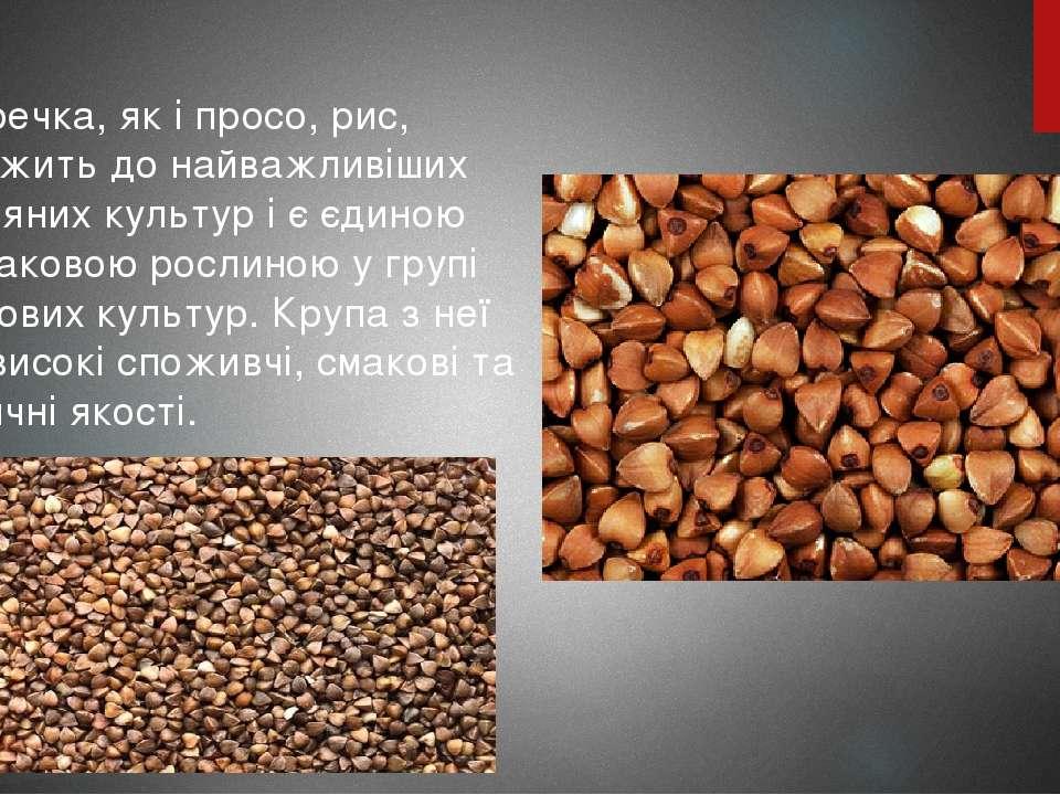 Гречка, як і просо, рис, належить до найважливіших круп'яних культур і є єдин...