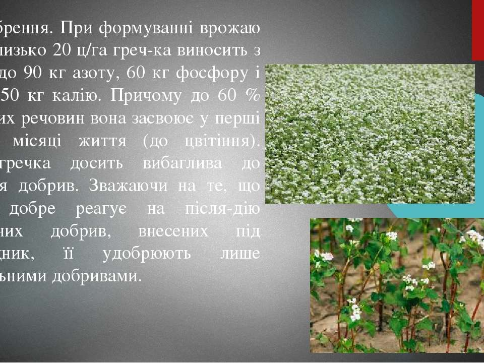 Удобрення. При формуванні врожаю зерна близько 20 ц/га греч ка виносить з ґру...