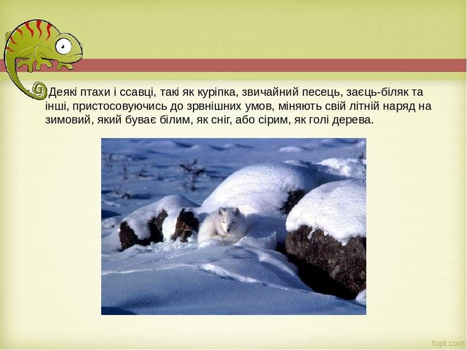 Деякі птахи і ссавці, такі як куріпка, звичайний песець, заєць-біляк та інші...