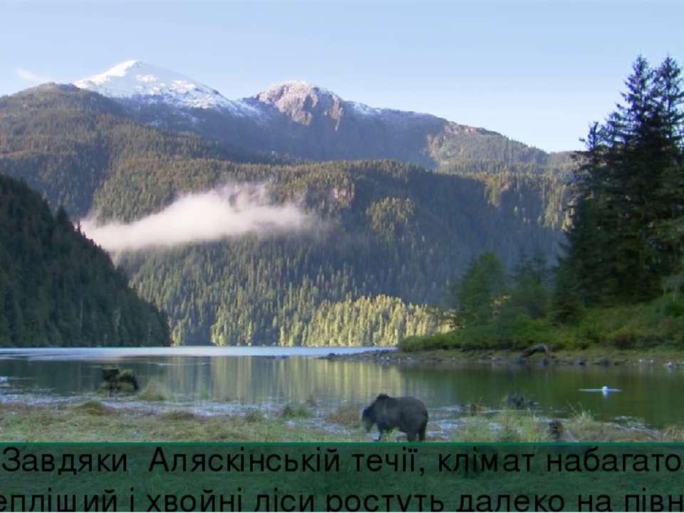 Завдяки Аляскінській течії, клімат набагато тепліший і хвойні ліси ростуть да...