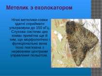 Метелик з ехолокатором Нічні метелики-совки здатні сприймати ультразвуки до 1...