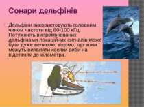 Сонари дельфінів Дельфіни використовують головним чином частоти від 80-100 кГ...