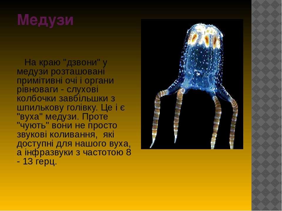 """Медузи На краю """"дзвони"""" у медузи розташовані примітивні очі і органи рівноваг..."""