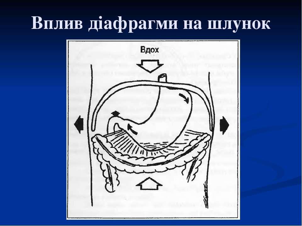 Вплив діафрагми на шлунок