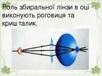 Роль збиральної лінзи в оці виконують роговиця та кришталик. Роль збиральної ...