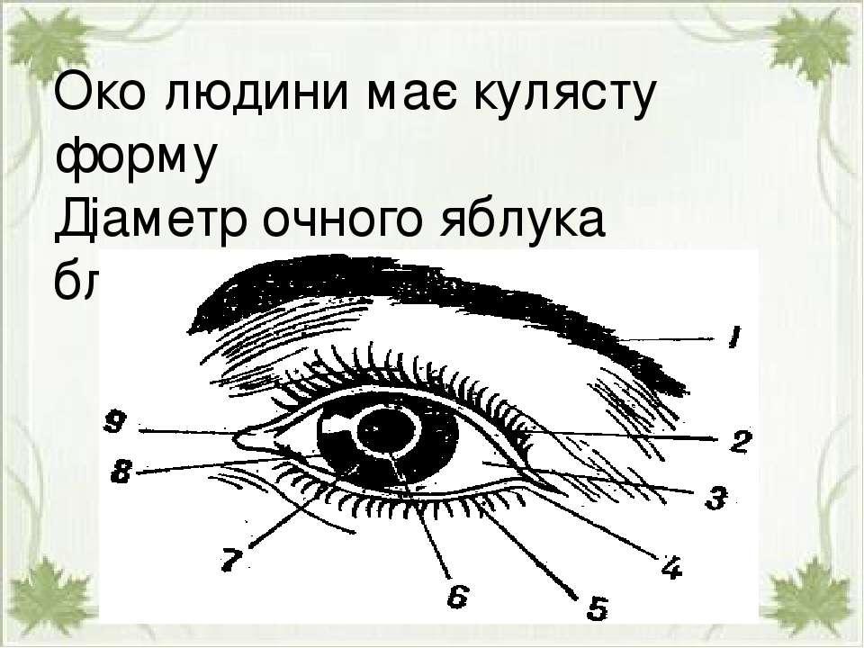 Око людини має кулясту форму Діаметр очного яблука близько 2.5см. Око людини ...