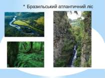 Бразильський атлантичний ліс