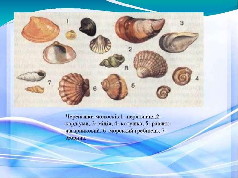 Черепашки молюсків.1- перлівниця,2- кардіуми, 3- мідія, 4- котушка, 5- равлик...