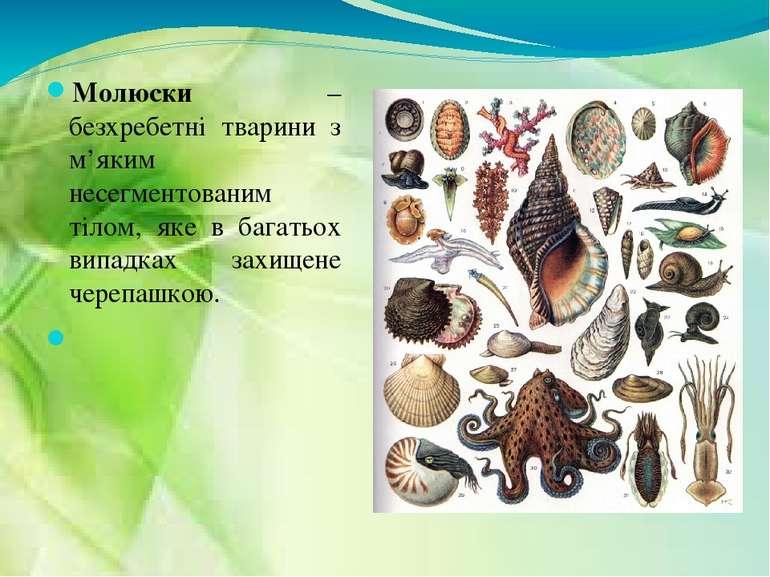 Молюски – безхребетні тварини з м'яким несегментованим тілом, яке в багатьох ...