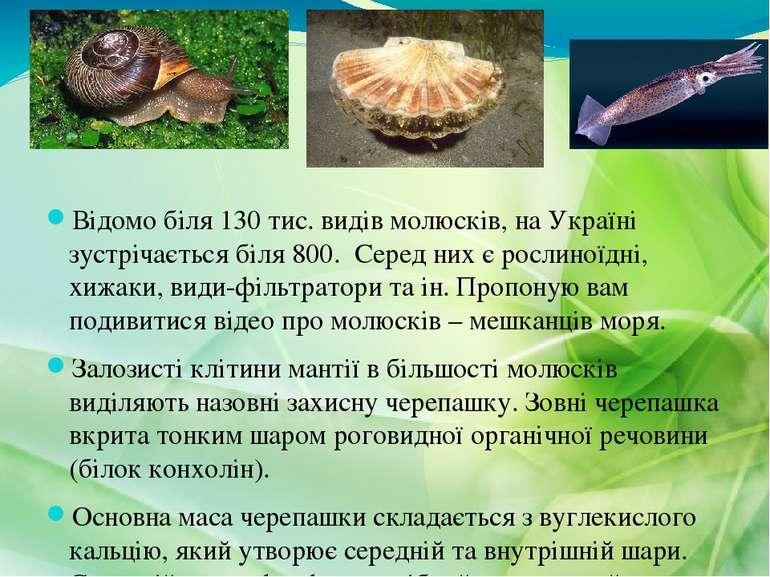 Відомо біля 130 тис. видів молюсків, на Україні зустрічається біля 800. Серед...