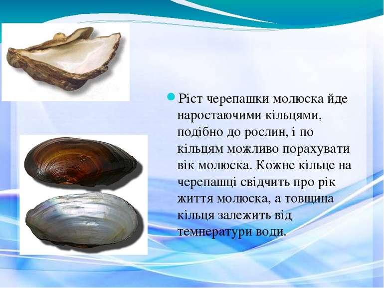 Ріст черепашки молюска йде наростаючими кільцями, подібно до рослин, і по кіл...