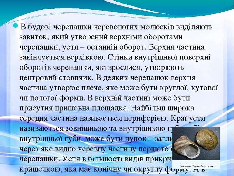 В будові черепашки черевоногих молюсків виділяють завиток, який утворений вер...