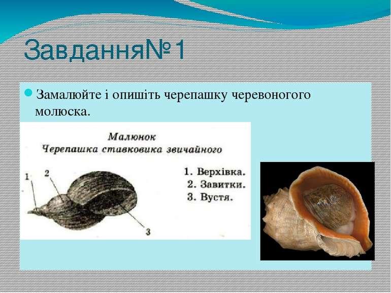 Завдання№1 Замалюйте і опишіть черепашку черевоногого молюска.