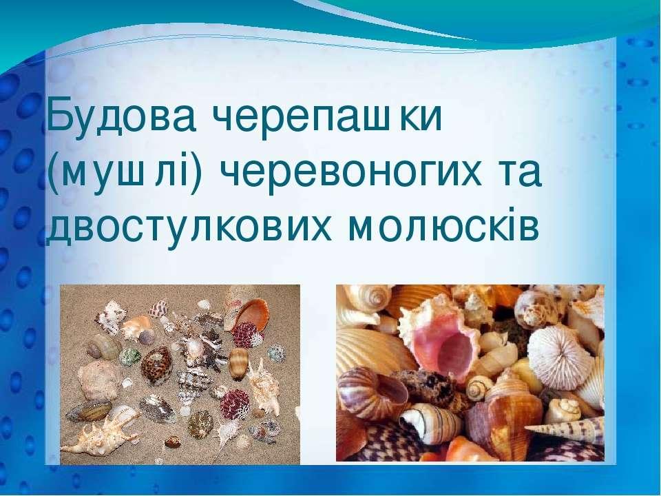 Будова черепашки (мушлі) черевоногих та двостулкових молюсків