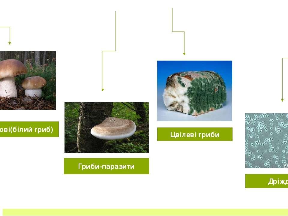 Отруйні гриби ОТРУЙНІ ГРИБИ- бліда поганка, чортів гриб, гірчичний гриб, чер...