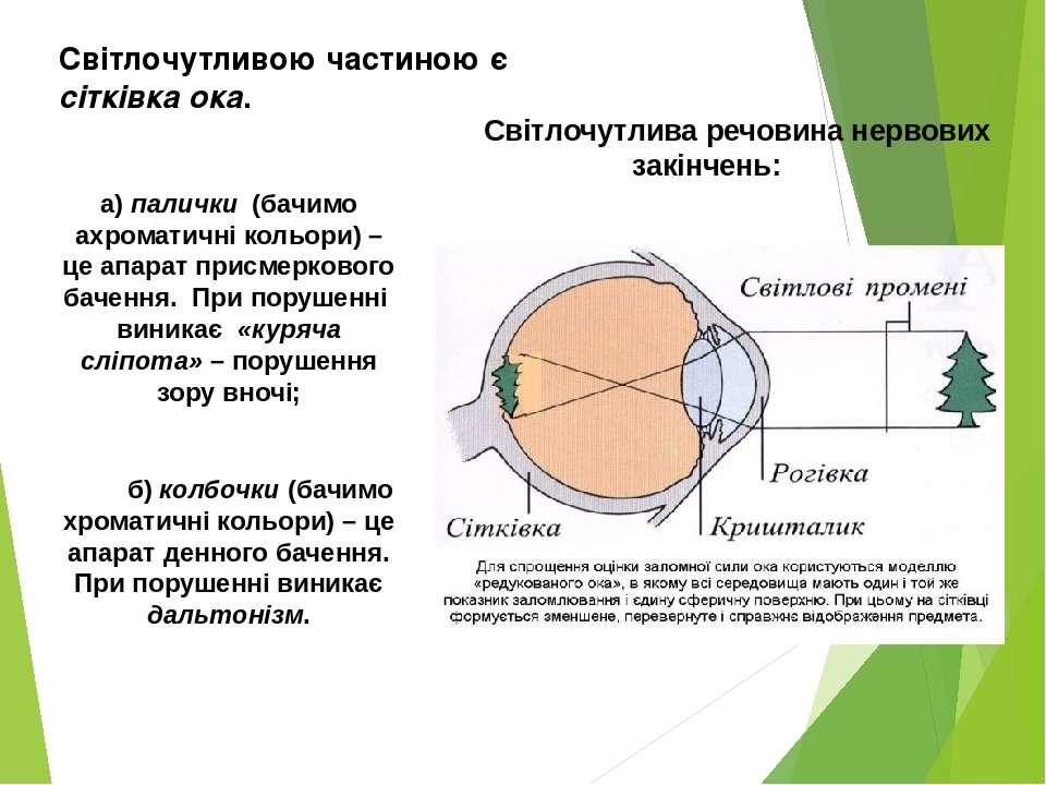 Світлочутливою частиною є сітківка ока. Світлочутлива речовина нервових закін...