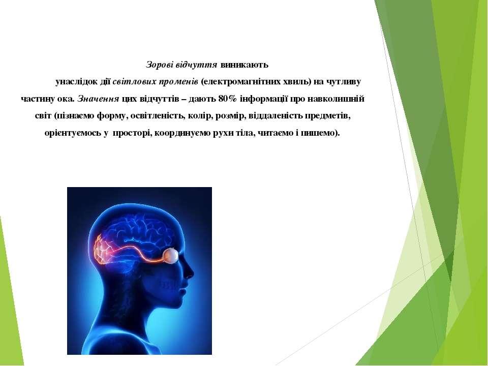 Зорові відчуття виникають унаслідок дії світлових променів (електромагнітних ...