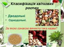 Класифікація квіткових рослин Дводольні Однодольні. За якою ознакою виникла т...