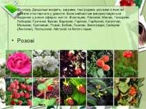 До класу Дводольні входять, зокрема, такі родини, рослини з яких ви можете сп...