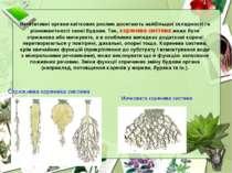 Вегетативні органи квіткових рослин досягають найбільшої складності га різном...
