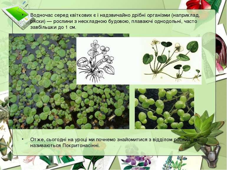 Водночас серед квіткових є і надзвичайно дрібні організми (наприклад, ряски) ...