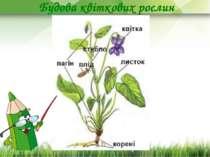 Будова квіткових рослин