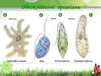 Одноклітинні організми