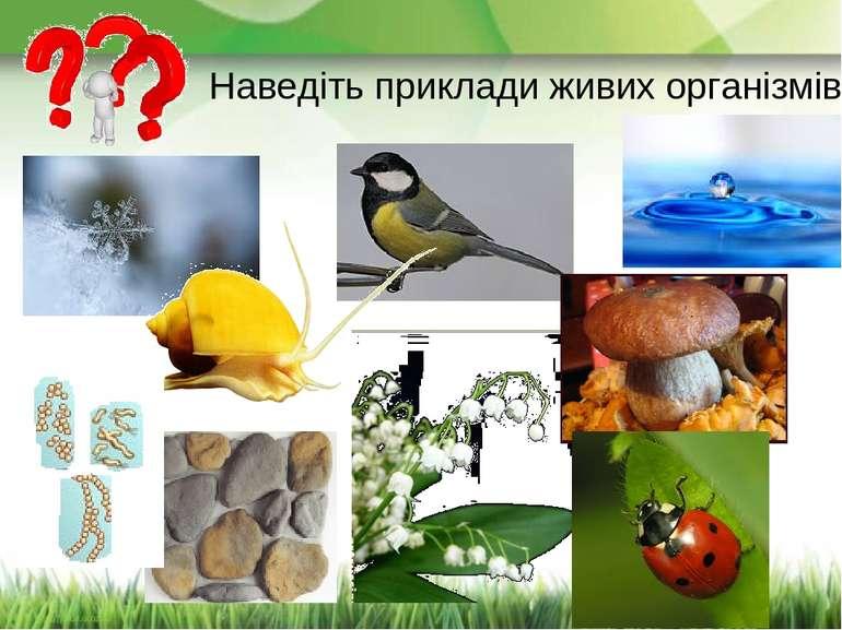 Наведіть приклади живих організмів.