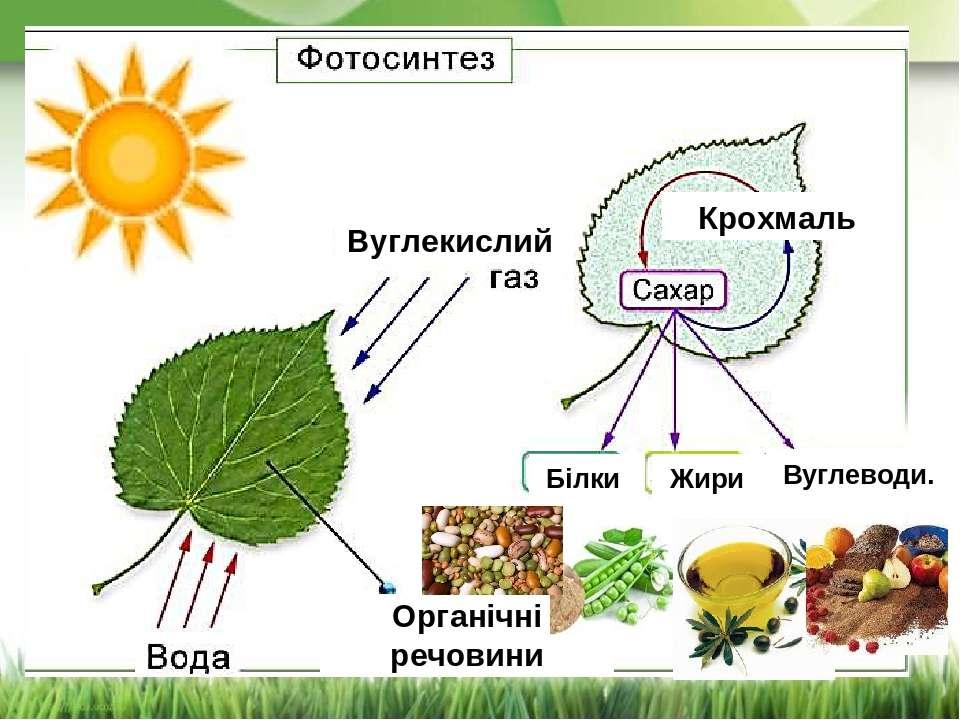 Вуглекислий Крохмаль Органічні речовини Вуглеводи. Жири Білки