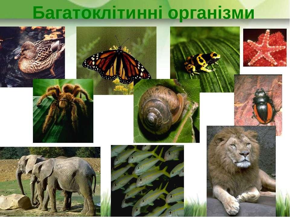 Багатоклітинні організми