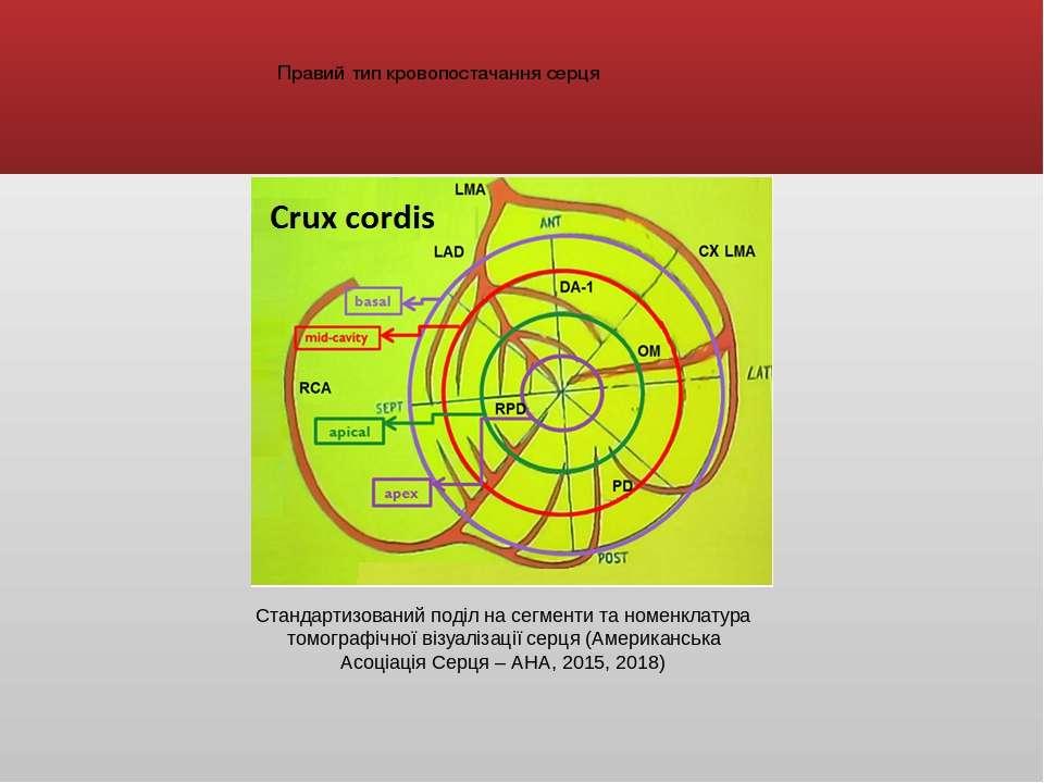 Стандартизований поділ на сегменти та номенклатура томографічної візуалізації...