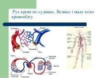 Рух крові по судинах. Велике і мале коло кровообігу
