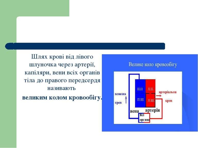 Шлях крові від лівого шлуночка через артерії, капіляри, вени всіх органів тіл...