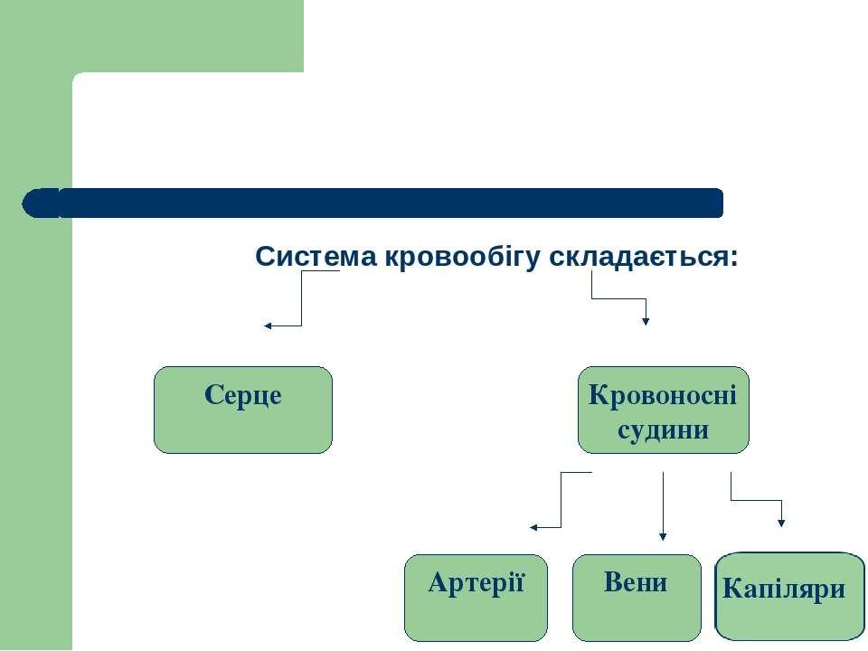 Система кровообігу складається: Серце Кровоносні судини Артерії Вени Капіляри