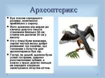 Археоптерикс Був птахом середнього розміру, величиною приблизно з сороку. Йог...
