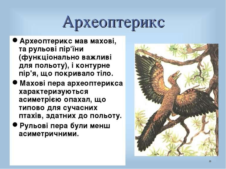 Археоптерикс Археоптерикс мав махові, та рульові пір'їни (функціонально важли...