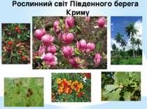 Рослинний світ Південного берега Криму