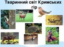 Тваринний світ Кримських гір