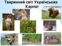 Тваринний світ Українських Карпат