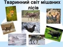 Тваринний світ мішаних лісів