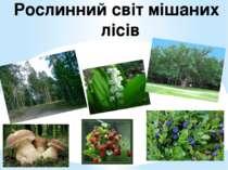 Рослинний світ мішаних лісів