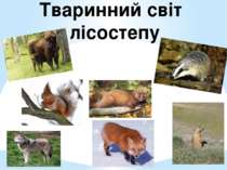 Тваринний світ лісостепу