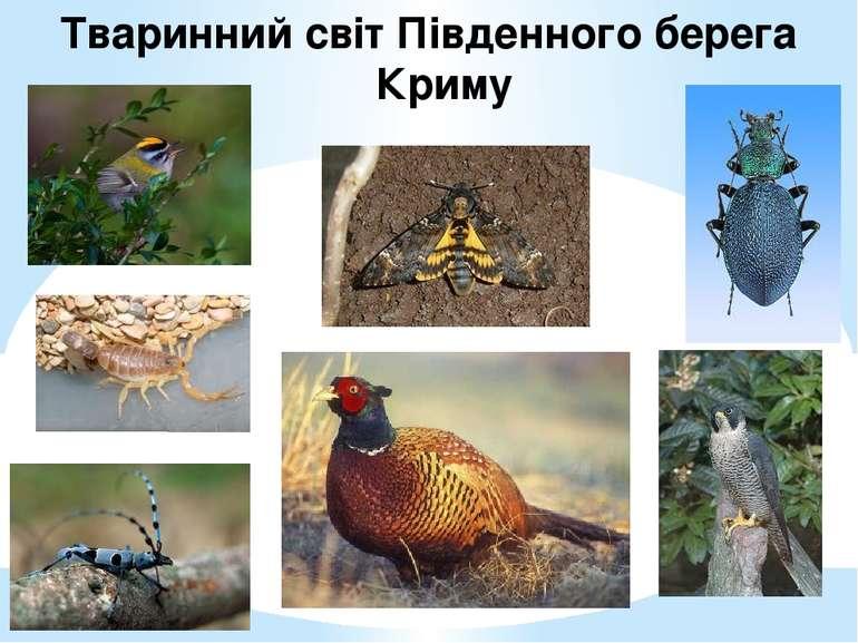 Тваринний світ Південного берега Криму