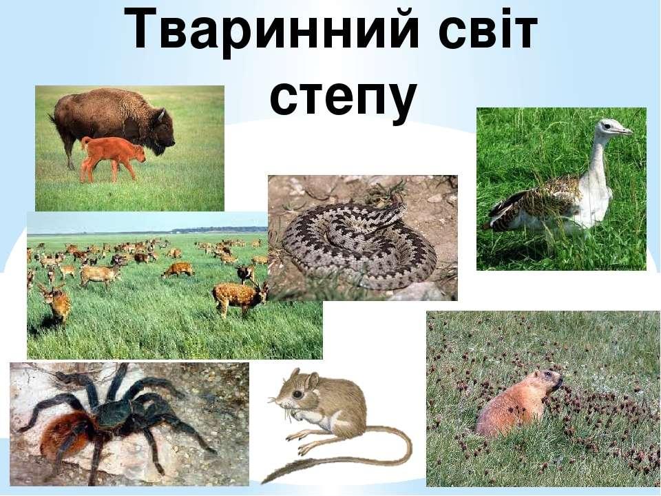 Тваринний світ степу
