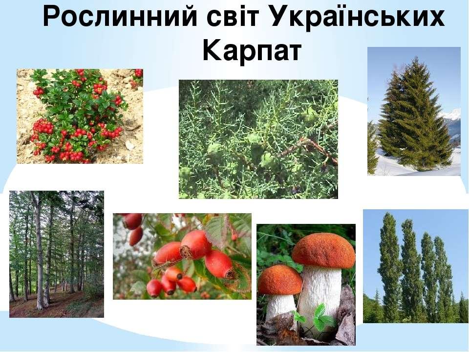 Рослинний світ Українських Карпат