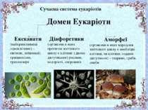 Сучасна система еукаріотів Домен Еукаріоти Екскавати (найпримітивніші одноклі...