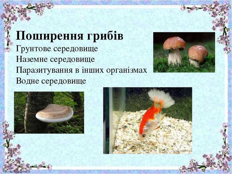 Поширення грибів Грунтове середовище Наземне середовище Паразитування в інших...